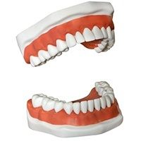 Dentures Photo